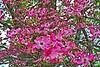 Hot Pink Spring
