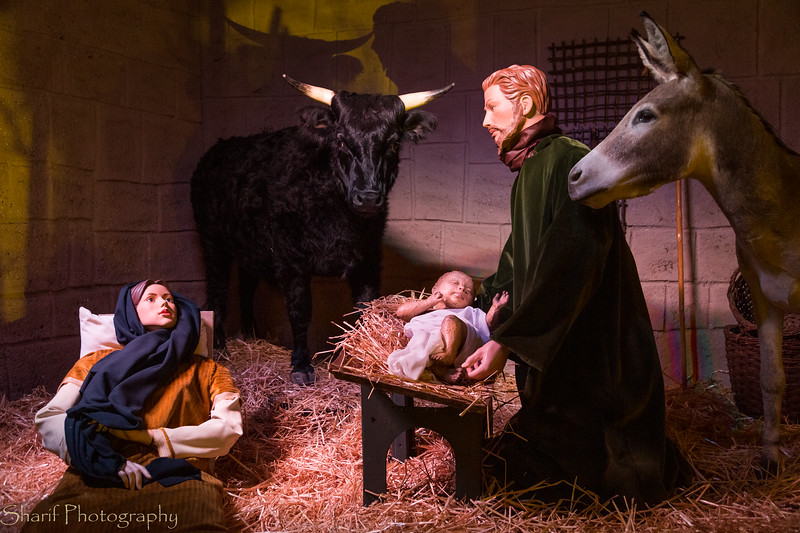 Nativity scenes in the cathedral.