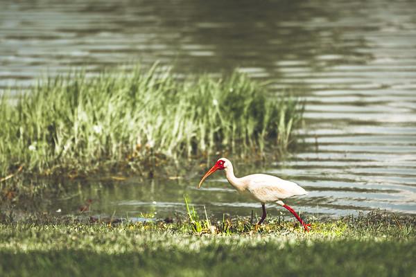 E - Egret