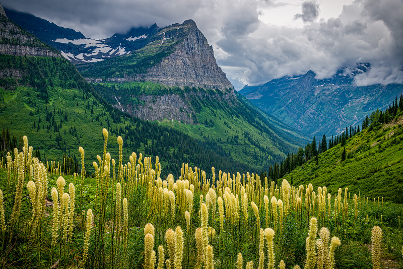 Beargrass and Approaching Storm | Glacier National Park | MT