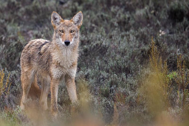 Winner, Mammals, 18 and Over: Jason Gilbody
