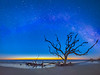 Candelabrum Tree Blue Hour