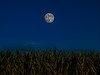 Corn Moon over Corn Field