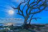 Super Moon High Tide and Old Oak