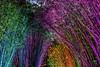 Rainbow Bamboo