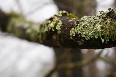 Day 28: Lichen