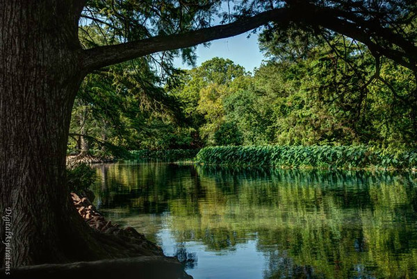 Framed by a tree, spring fed river in San Marcos.