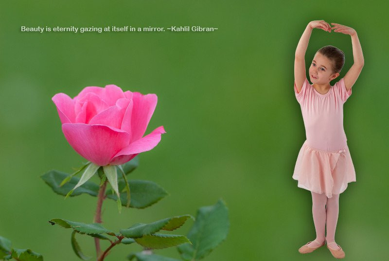 This is a composite of the rose image I captured in the yard this week and and one from this year's granddaughter ballerina shoot. I am going to class next week on how to use Photoshop for creating collages of images. The rose was shot at 2.8 with a 70-200 lens to blur the background.