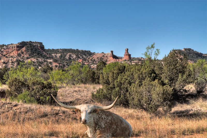 Lighthouse Peak is the signature feature for Palo Duro Canyon and requires a 3 mile hike to reach. I was still about a mile from the Lighthouse when I captured this photo. Oh, yes, I added the longhorn from a previous shoot ;-)