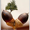 """The creation of a thousand forests is in one acorn.""<br /> Ralph Waldo Emerson"