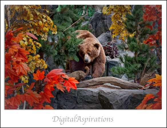 """You can run, but you can't hide!""<br /> ""Bear"" with me for a few more wild game photos ;-)"
