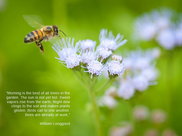 Captured at the St Richard's Episcopal Church memorial garden this morning. Yes the bee was really there this time.