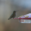 December 28, 2009<br /> Monday, 3:30<br /> <br /> This little Hummer is one of my daily visitors<br /> <br /> f/2.8, 1/25, Manual, 200mm, ISO 400