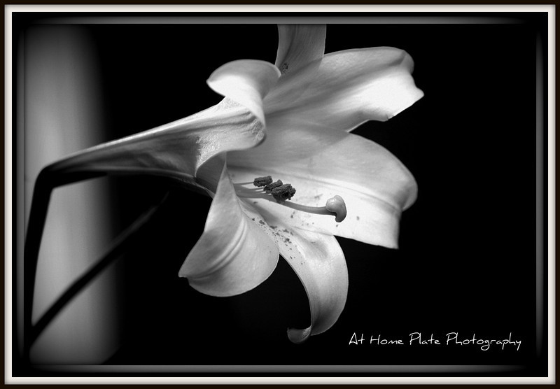 April 26, 2011<br /> Tuesday, 3:25pm<br /> <br /> Lovely Fragrance of the Lily<br /> <br /> f/4.5, 160mm, 1/30, ISO 400