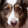February 4, 2013 -- <B> <i>D</B></i> is for Dog.