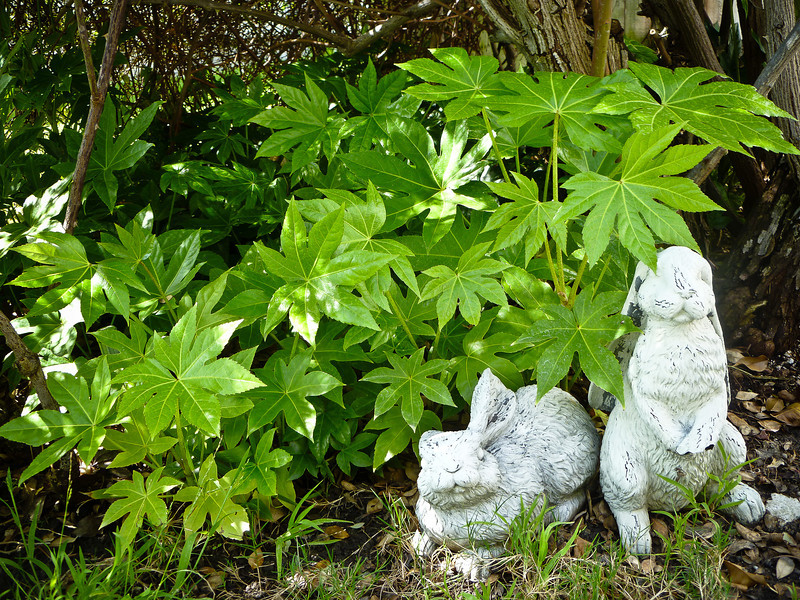 March 23, 2013 -- 'A forest scene with bunnies.'<br /> <br /> No one knows where these plants came from, but they look so cute among the trees and bushes that they are safe from my brother-in-law's rakes and shovels.