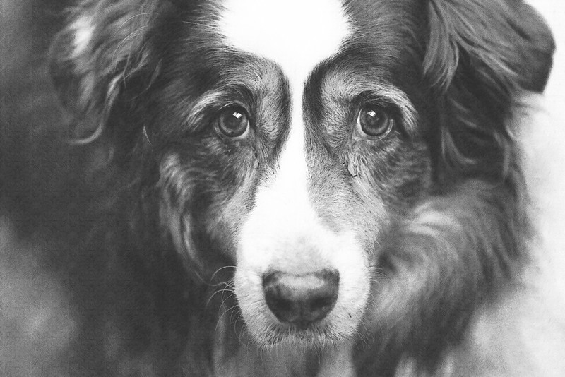 "March 22, 2013 -- Brandi as a ""pencil sketch."" Someone at work was playing around with Fotosketcher today, and I thought it would be fun to try it out."