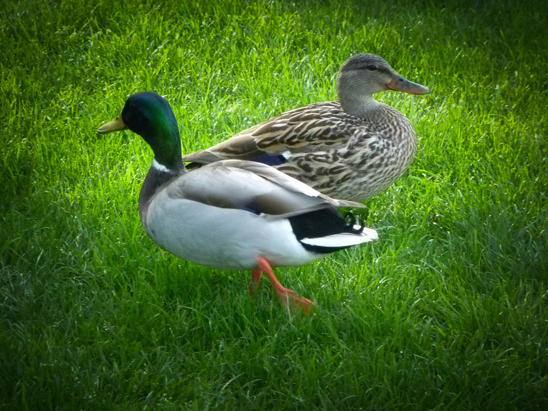 March 26, 2013 -- This pair was outside our office's side door when I left work this evening.