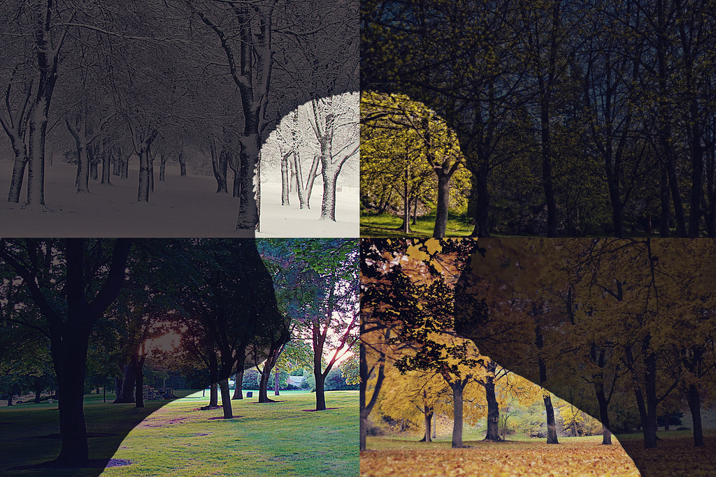 In between Seasons.... 293/365 11/20/13