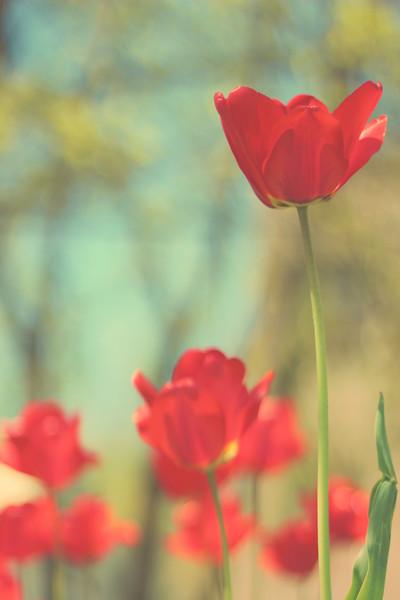 Spring Days.... 84/365 4/25/13