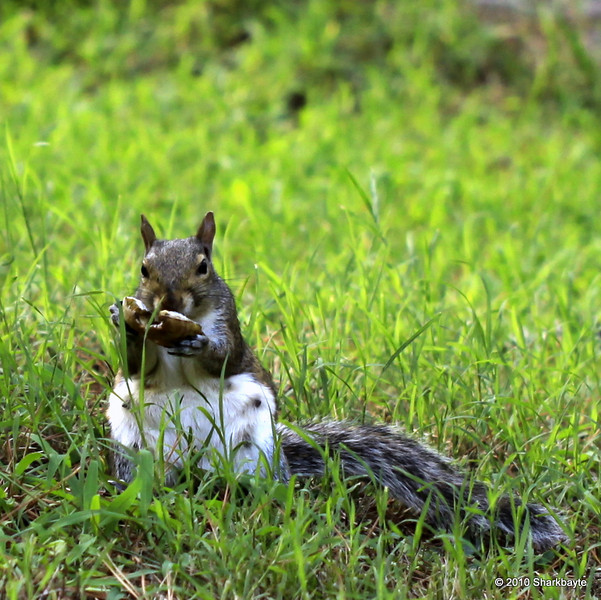 Day 220/365 She is enjoying what appears to be a pita pocket or similar type bread.  #365Project (2010.08.08)