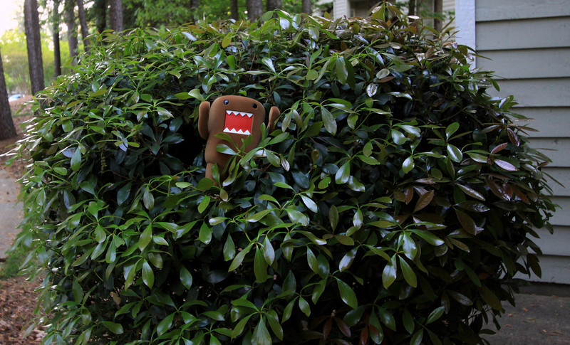 (17.04.2010) Day 107-Domo thought it would be funny to jump out of the bush yelling RAAAR!!! Obey the DOMO!!!..you should have seen the look on that old lady's face...Domo has a lot of explaining to do (and apologizing!)