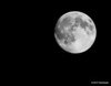 Last night's moon, not quite full but darn close! Waxing gibbous 98% full. I am hoping with the weather's cooperation to take a shot at tonight's full moon. Day 295 (2010.10.22) #365project @sharkbayte