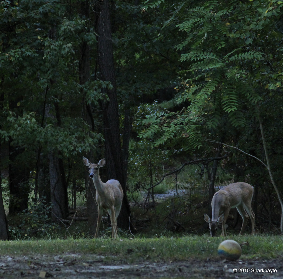 A little kickball anyone? Day 253 #365Project (2010.09.10) @sharkbayte