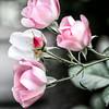 0708 Sally Go Round the Roses