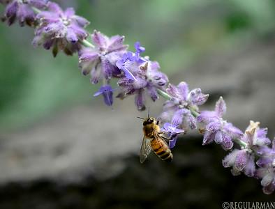 0814 Honey Bee