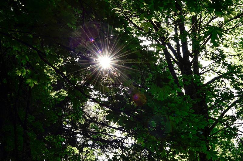 0824 Sunburst