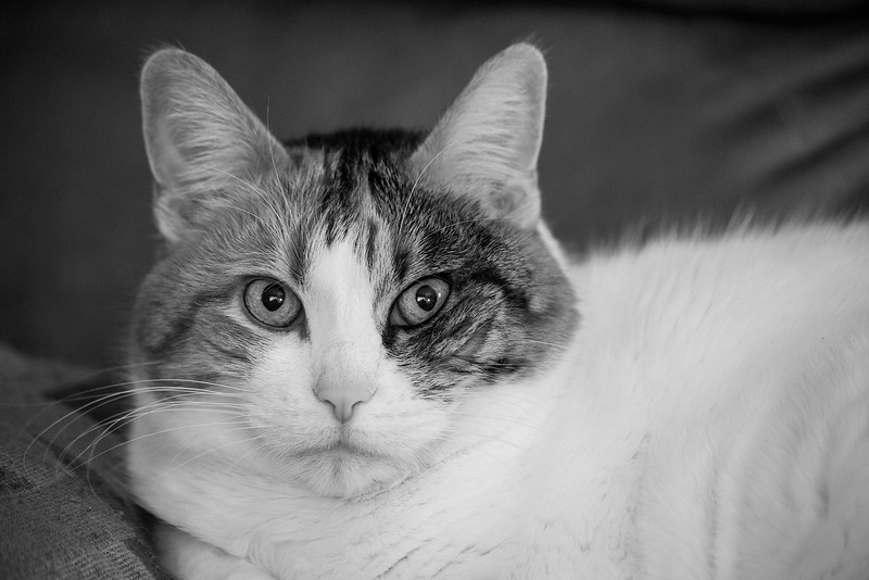 122 of 365 (Monochrome Callie)<br /> <br /> Callie sitting on the couch wonder what the heck I'm doing. Shooting her in monochrome mode. 1/10 sec;   f/5.6;   ISO 2000 hand held.