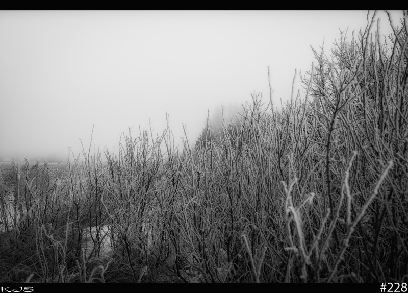 Foggy<br /> Got to love those foggy and frosty mornings, makes for such a natural surreal scene.