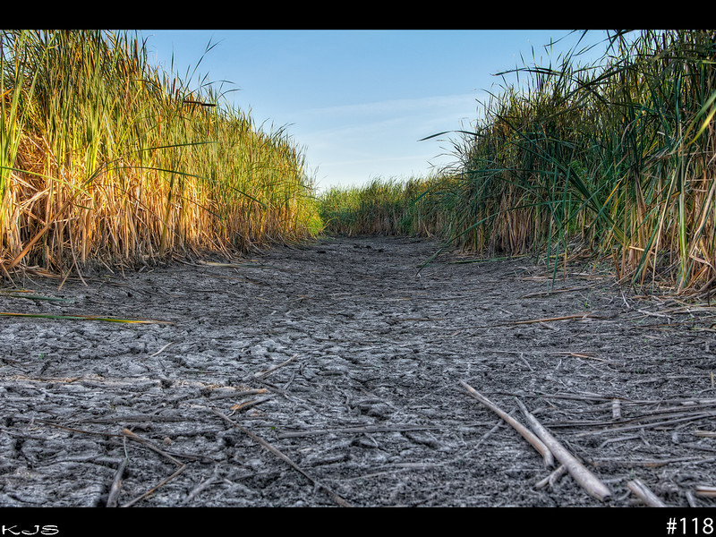 Dry Cattails<br /> I was traveling to my hunting spot today and ran across another drainage area that is drying up. There use to be several feet of water in this area, now one has to dig to get water.