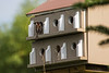 Messy Tenants<br /> I seem to be on a bird kick lately. This bird house looks like it threw an all night rock'n party.