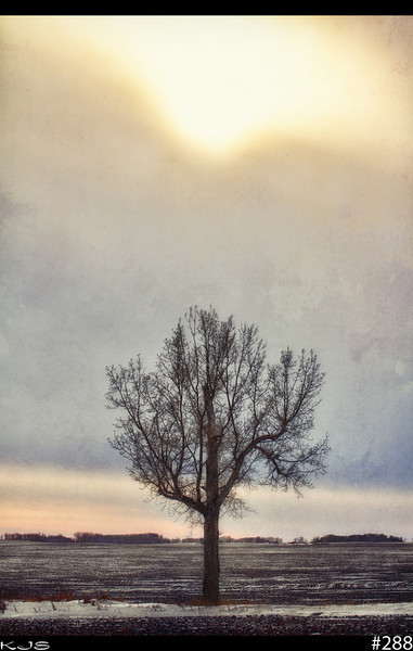 Stand Alone<br /> Weather service says we got 4+ inches of snow, but I'm not seeing it as I was driving around today on back roads. I ran across this lone tree and with the heavy clouds and the sun trying to burst through, made for #288. I went with textures on this one since it's been a long time since I did anything with textures.