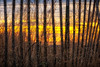 Sunset Thru the Fence<br /> A little chilly and breezy today, but I'll take this over a hurricane anyday.