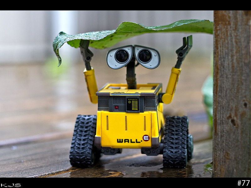 Wall-e was out for a stroll and got caught in the rain storm so he took shelter.