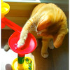 This is my first picture of my 365 picture project.  One picture a day.  Fritti, our new kitten, likes playing with the marbles.  So I caught him in action.