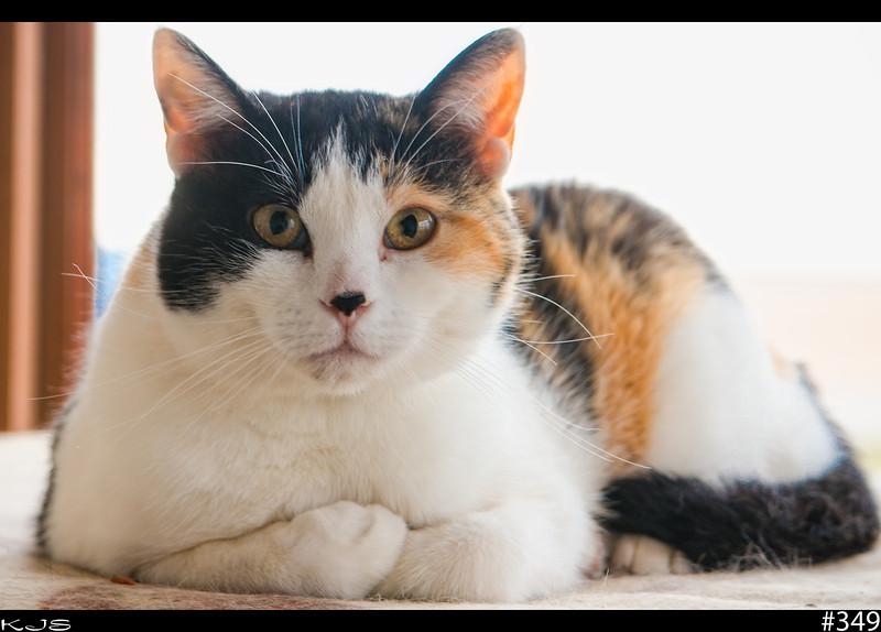 Caturday<br /> #caturday on google+
