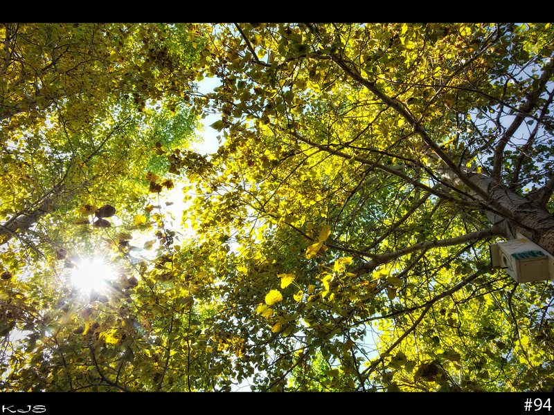 Fall<br /> The trees all across the countryside are turning colors. Fall is here and school starts in a few days.