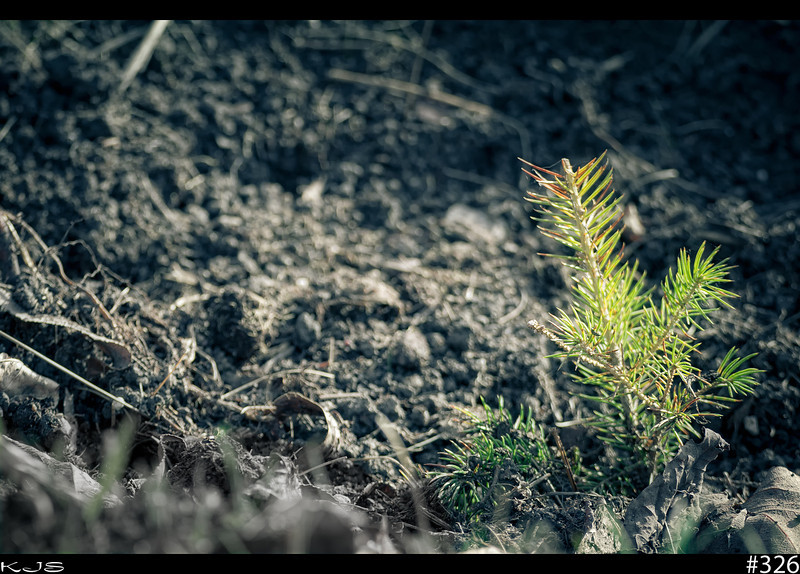 A New Beginning<br /> Start the growing season off by planting a tree and help save the world.
