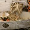 Day 362:- Bones