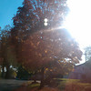 Day 354:-  Sunset & Fall
