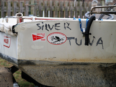 Silver Tuna