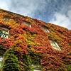 1107 pleasure<br /> <br /> I love all the colors of autumn.