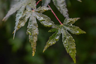 1129 spot  Spots of water on late summer leaves.