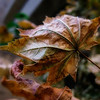 1021 extreme closeup<br /> <br /> I think that I shall never see;<br /> A poem as lovely as a .... leaf??<br /> <br /> Apologies to Joyce Kilmer