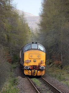 37409, Tyndrum Lower. 24/04/16.