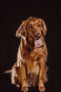45North_Dogs_0014